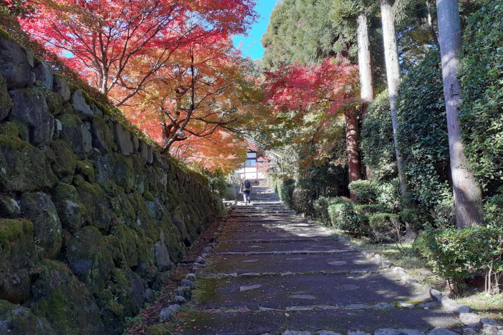 Approach to Shodenji in Kyoto showered with maples
