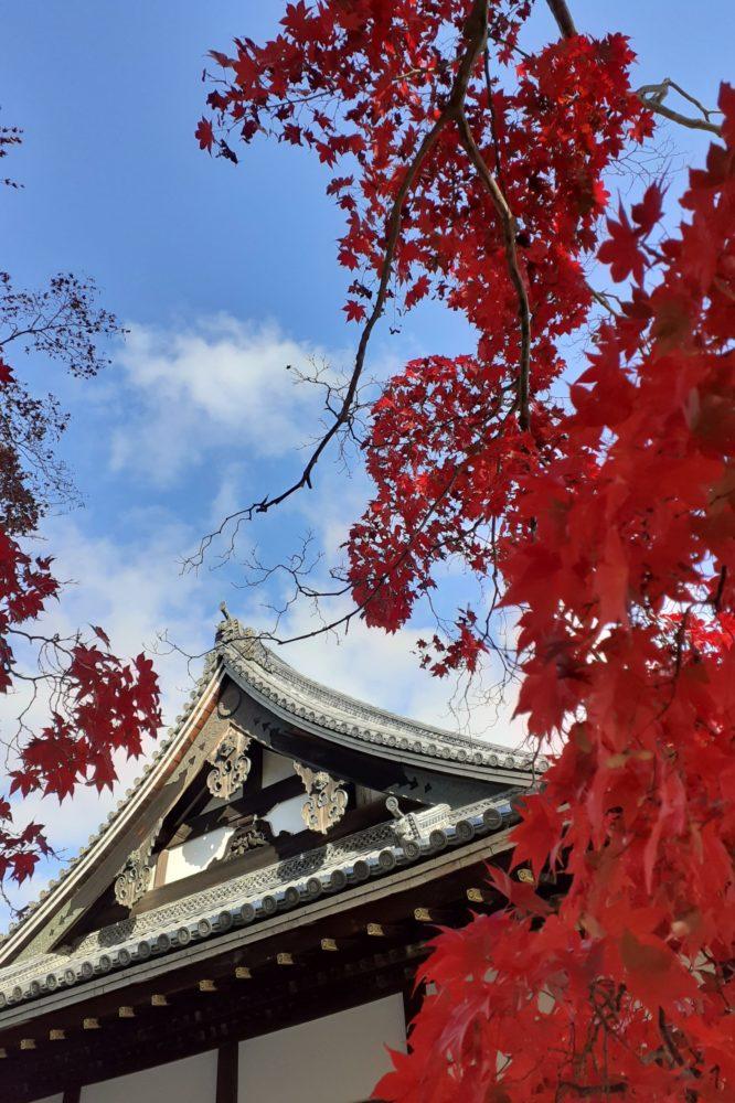 Maples at Ninnaji, Omuro