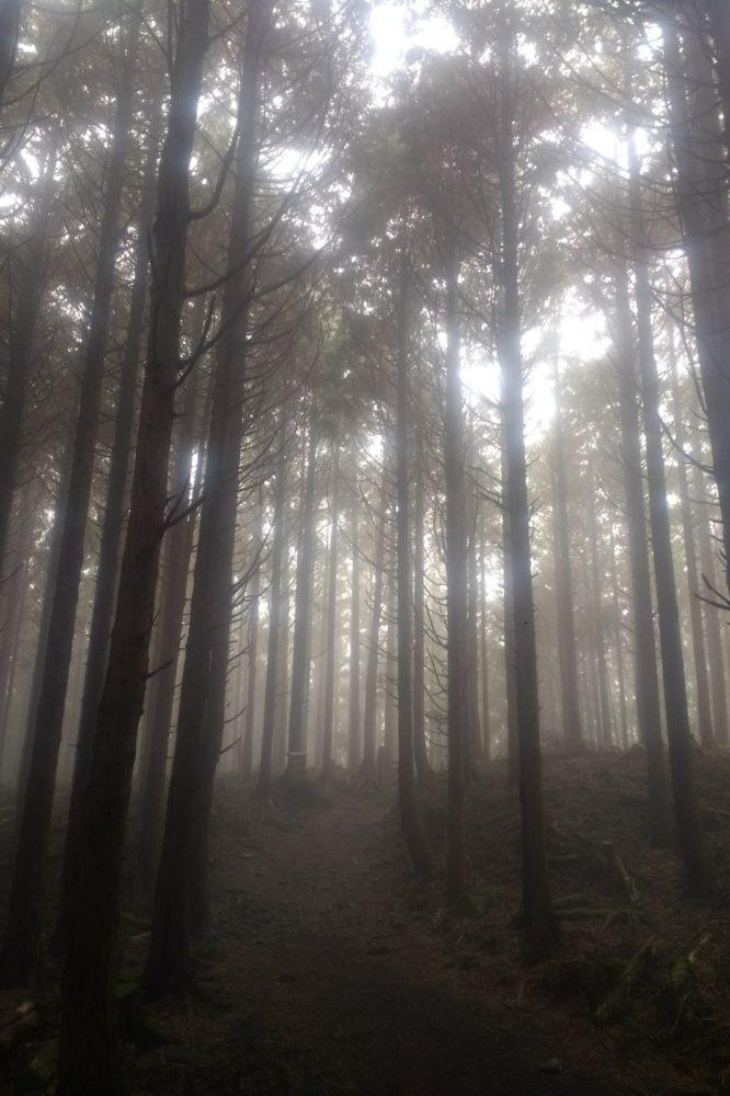 Misty morning Kumano kodo