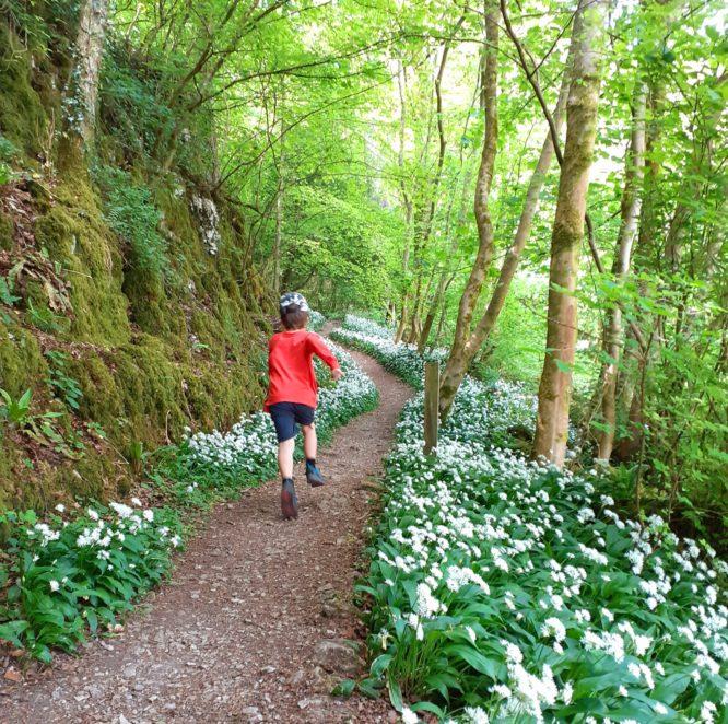 Child runs through wild garlic in Serpentine Woods Kendal
