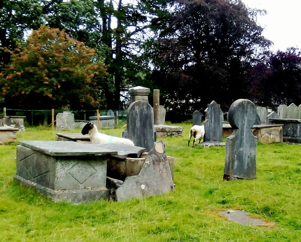 Gothic sheep in the graveyard at Cartmel Priory - j