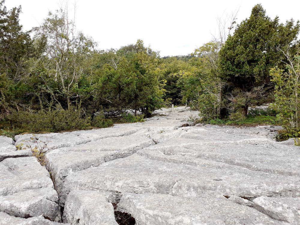 Limestone pavement on Hale Fell