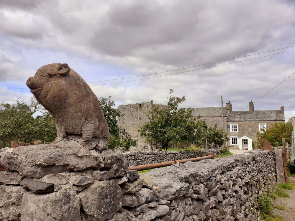 Pig and pele tower guard the farm in Hazelslack