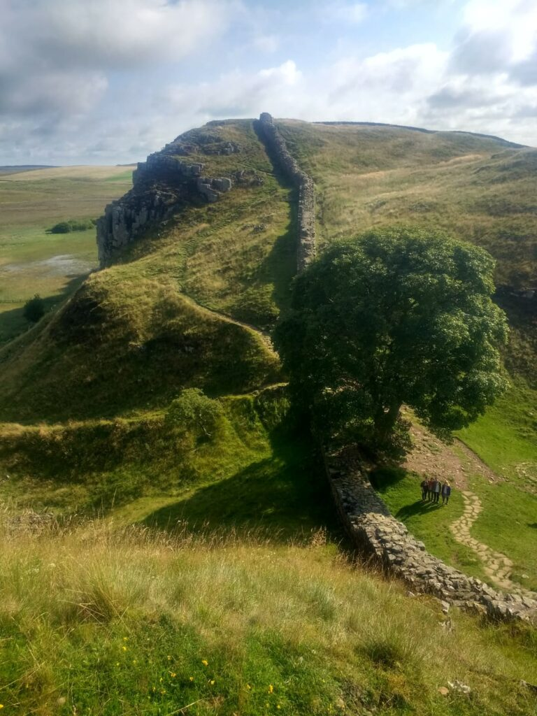 Sycamore Gap viewed from the wall