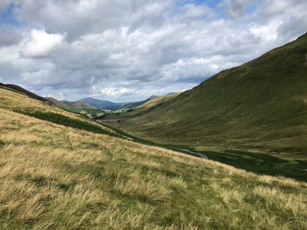 Waving grasses at Newlands Pass