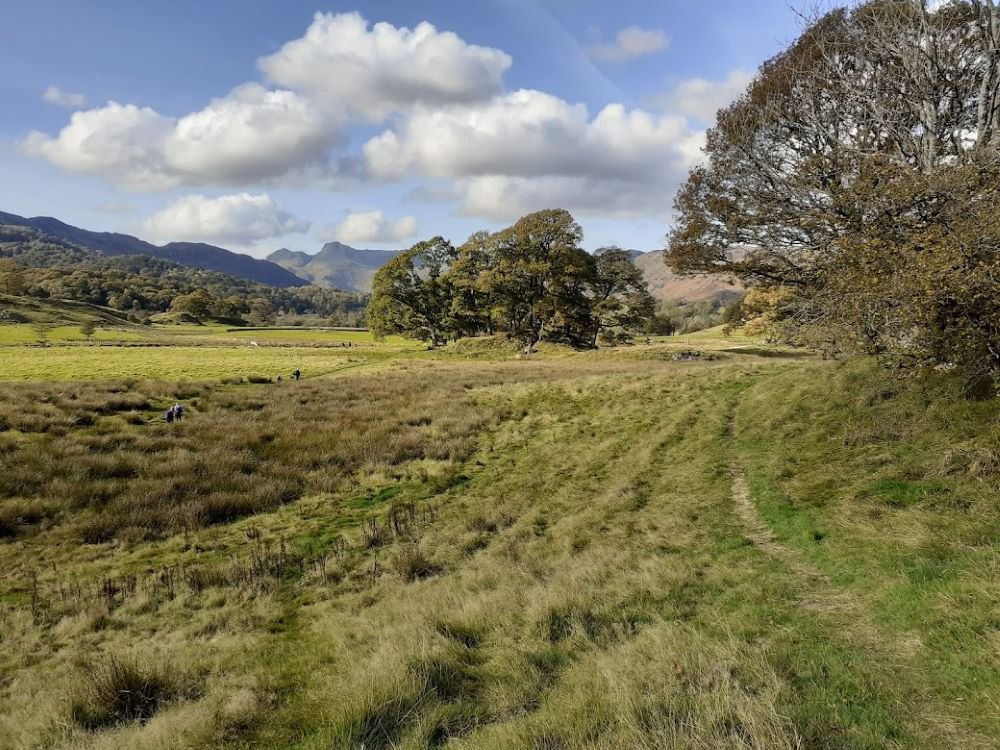 Fields of gold by Elterwater