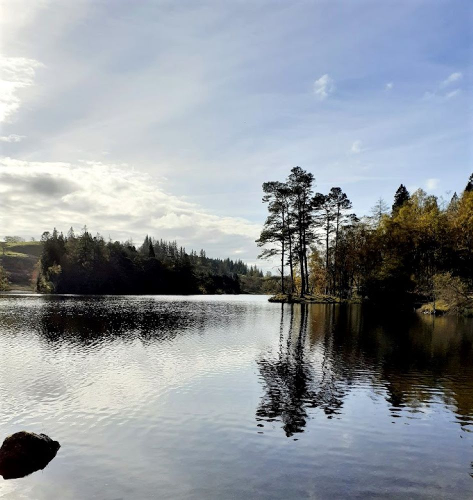 Tall pine tree reflected in the water at Tarn Hows